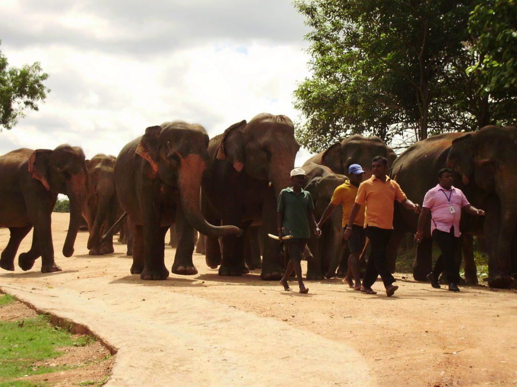 Шри Ланка 19 января 2020 года